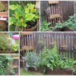 Frugal Food – Utilise your Garden