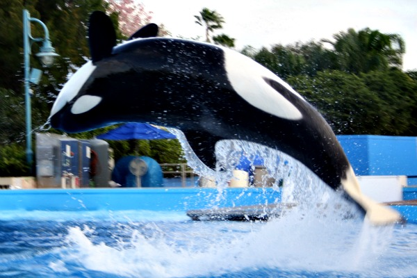 shamu