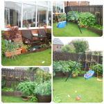 The evolution of our vegetable patch in the garden