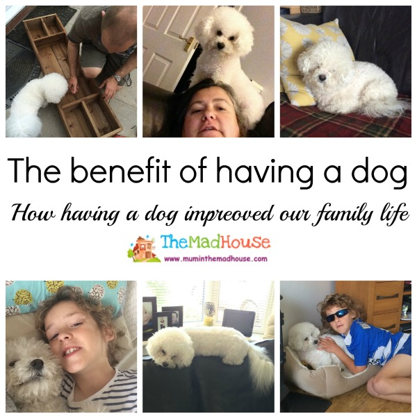 benefits of dogs