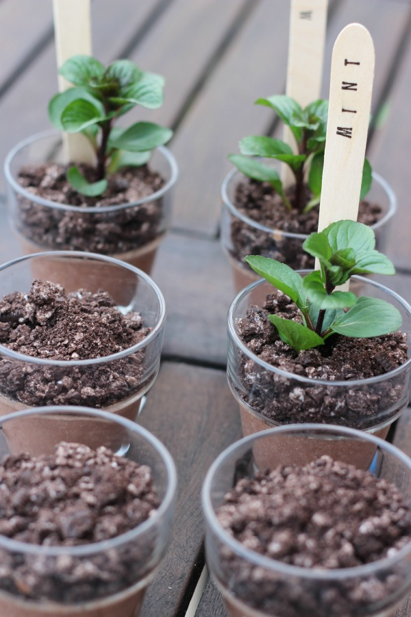 potted chocolate mint puddings recipes dishmaps potted chocolate mint ...