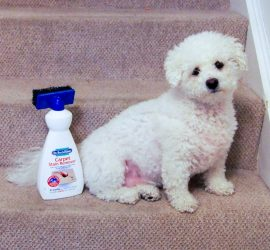 Dr Beckmann Carpet Cleaner - a must have for mums