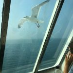 Tips for Ferry Crossings with Kids #KidsatSea