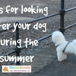 How to keep your pooch happy in the summer