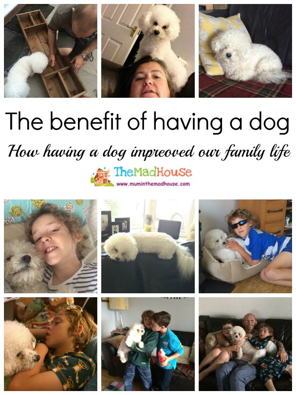 benefits of having a dog