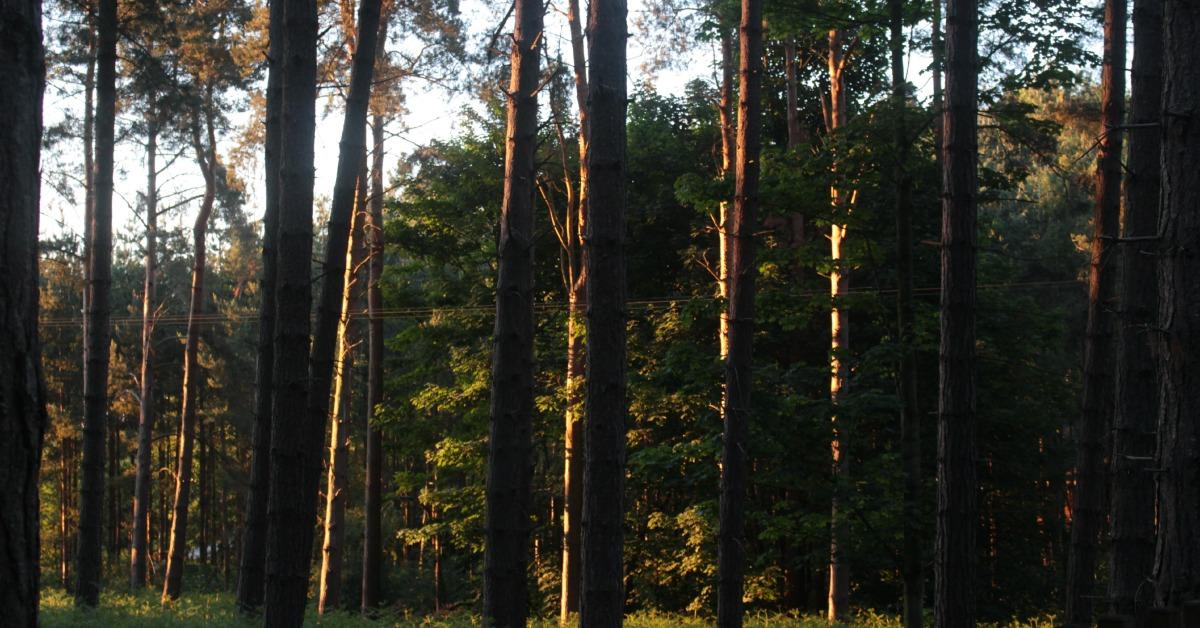 trees facebook