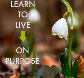 learn to live on purpose