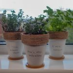 DIY Painted Terracotta Plant Pots – with Herb Puns