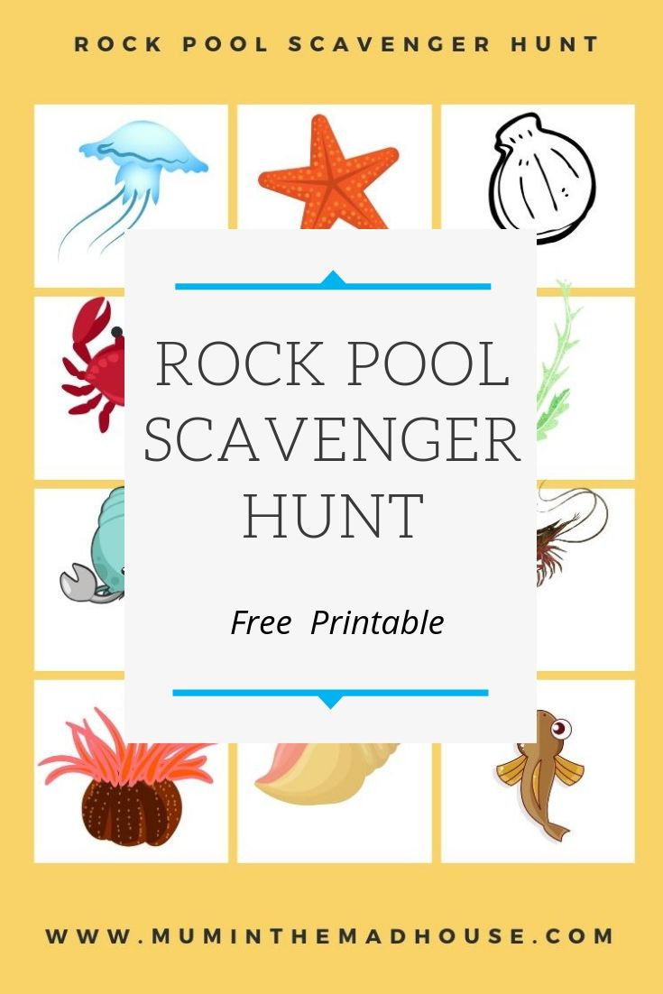 Rock Pool Scavenger Hunt or Rock Pool Eye Spy - Free Printable. Have loads of fun on the beach by seeing what you can find in the tidal rock pools.