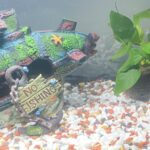The benefits for Children of Owning Fish