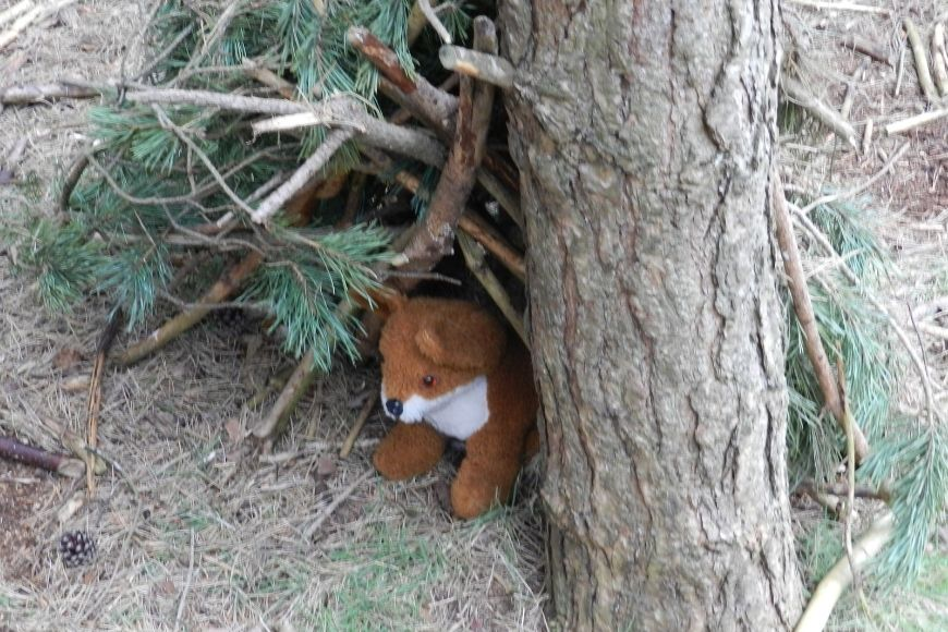 A soft toy fox in a miniature den made of pine twigs
